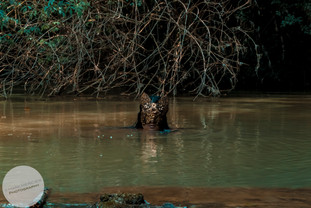 Habitant_Crepuscule_River-24.jpg
