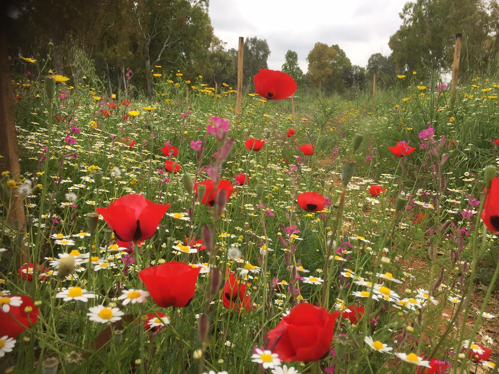שיקום בתי גידול בפארק גני יהושע
