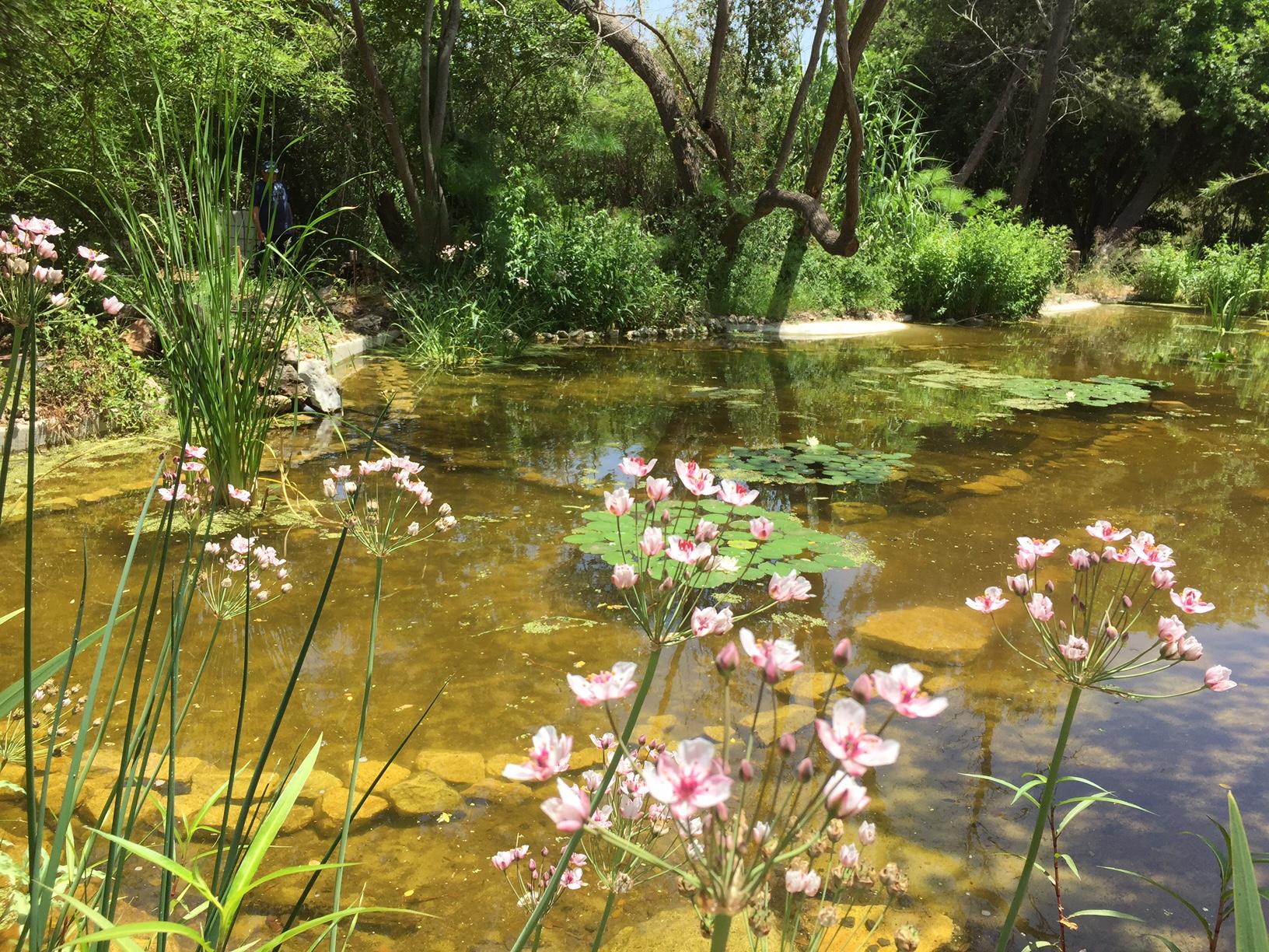 שיקום צומח בגן הבוטני בגני הטבע