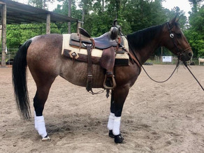 Dualing Little Rey - Cutting Horse