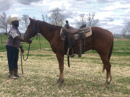 Lil Diamond Tivio 2017 Gelding w/VIDEO