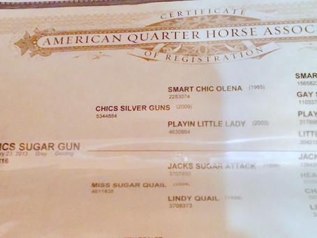 CHICS SUGAR GUN