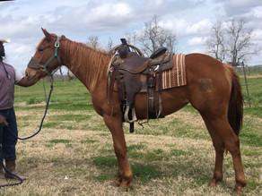 PRISON HORSE   Zippo Me Dixie   *VIDEO*