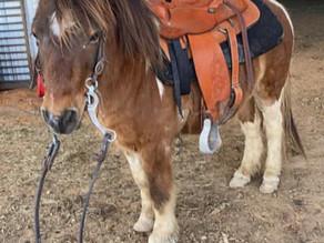 Tiny Tim Pony