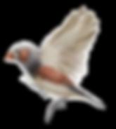 SF_BIRD_1.png