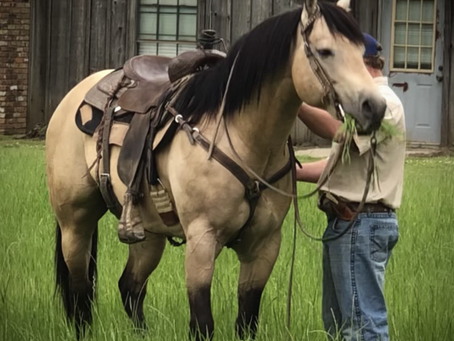 "Cruzin Riptide aka ""Gunsmoke"" - Angola Stallion"
