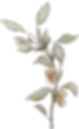 Flora_arrangement5.png