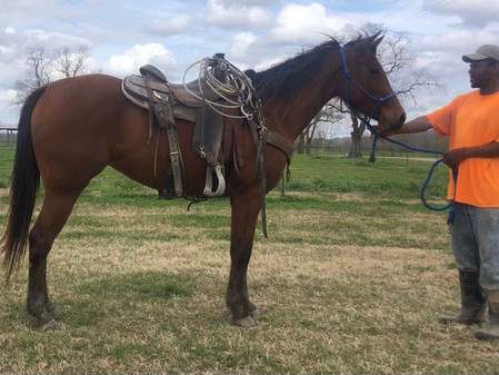 Whiskey Sugar Baby 2017 Mare w/VIDEO
