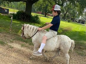 Biscuit - Mini Pony