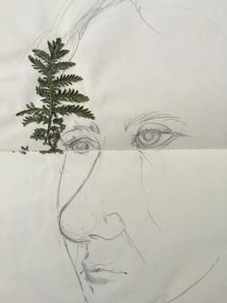 Plant brow