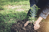 joven-plantando-arbol-jardin-como-dia-ti