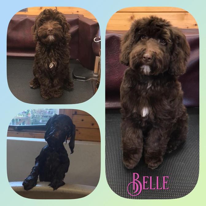 Belle (puppy)