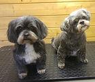 Tilly & Rosie.jpg