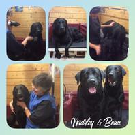 Marley & Beau
