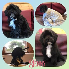 Jenny (puppy)