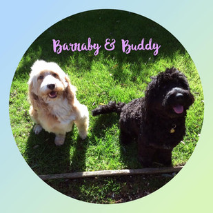 Barnaby & Buddy