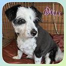 Dolly 🐶❤️x #mixedbreed #clip #dog #doggroom #doggroomer #doggrooming #groom #groomer #grooming