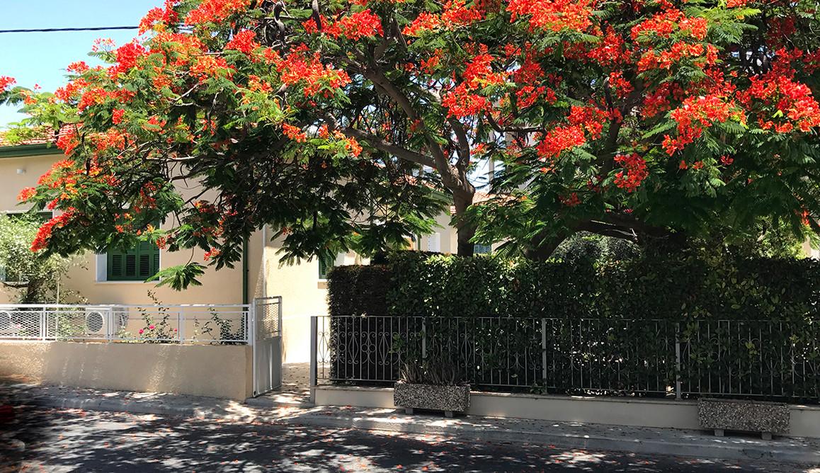 AVGI'S HOME TREE