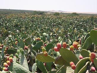 orly cactus farm.jpg