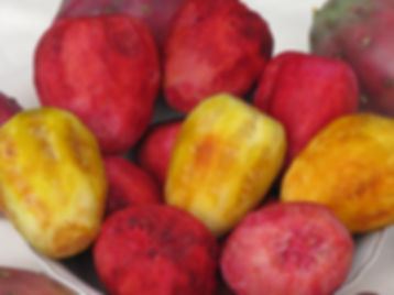 prickly pear fruit.JPG