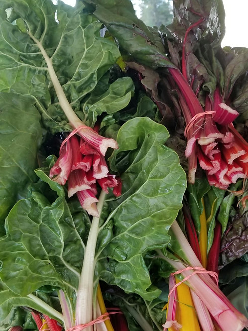 Swiss Chard (Bunch)