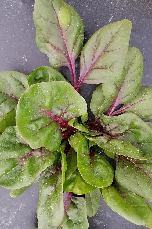 Red Vein Spinach
