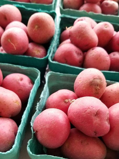 Baby Red Potato (Pint)