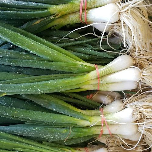 Green Onions  (Bunch)