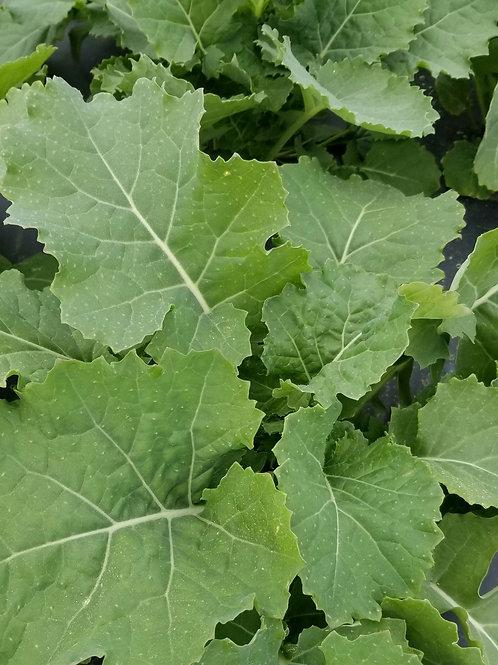 Smooth Kale