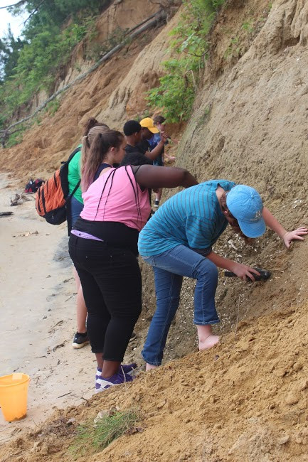 Digging for fossils at York River State Park