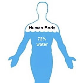Water-in-human-body-chart.jpg