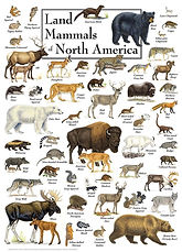north american land mammals image.jpg