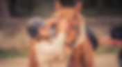 sport etudes equitation.png