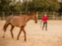 sport etude equitation sud france.png