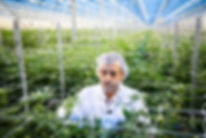 Guy-Degrace-cannabis-grower 2.jpg