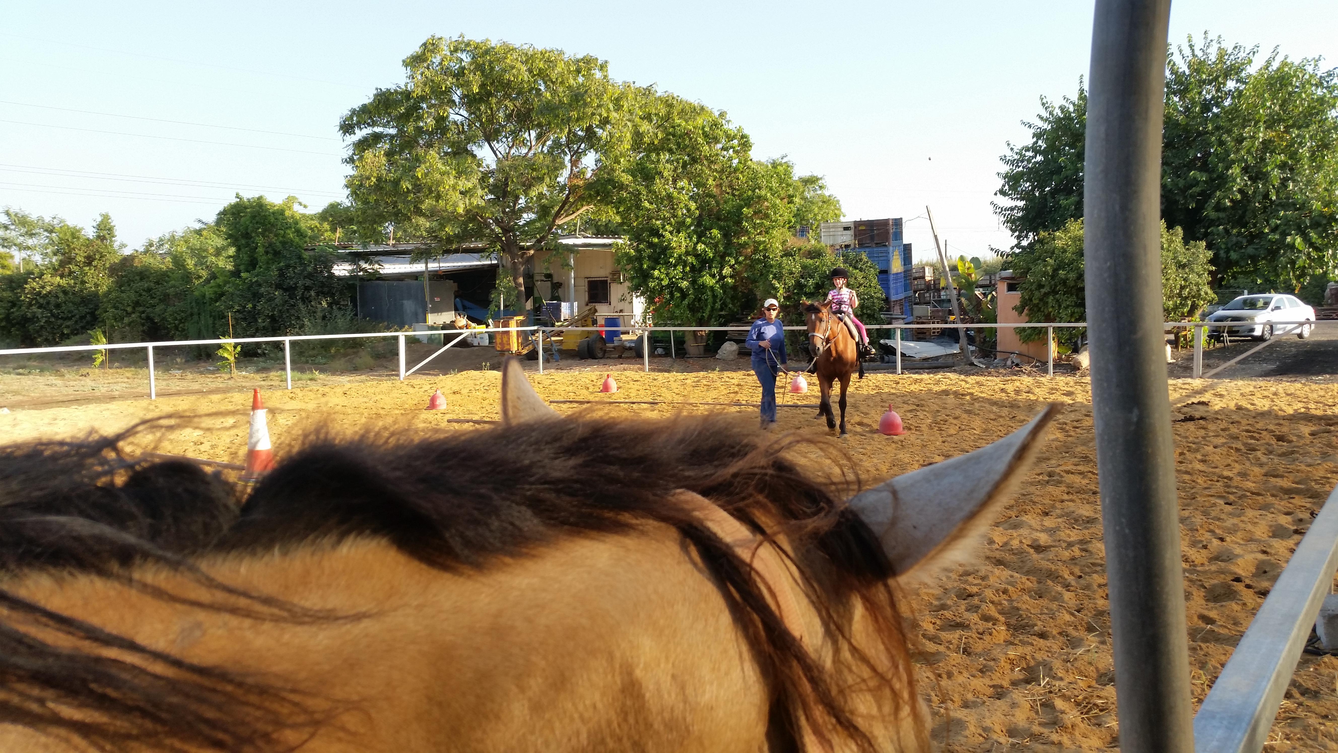 מיומנו של הסוס