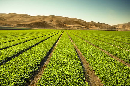 cultivo biologico fertilizante natural