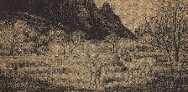 MuleDeer6.jpg