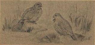 Birds17.jpg