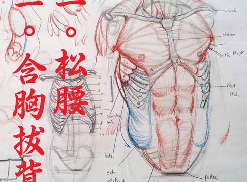 Peito, costas, cintura: a dinâmica do tronco no Tai-Chi-Chuan