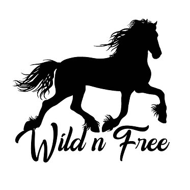 Horse vinyl decal sticker for horse float friesian horse wild n free in black front view