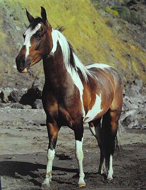 Paint horse Poster small