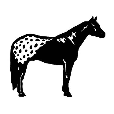 Horse appaloosa vinyl decal sticker in black front view