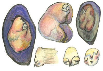 Musselsketch2.jpg
