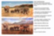 Ron's Elephants Side- by-Side.jpg