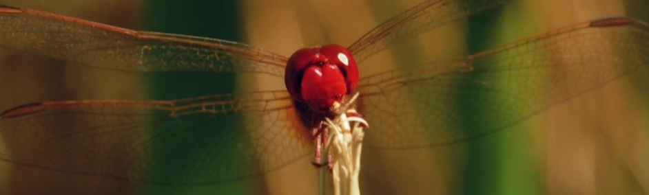 The Dragonfly | the small things