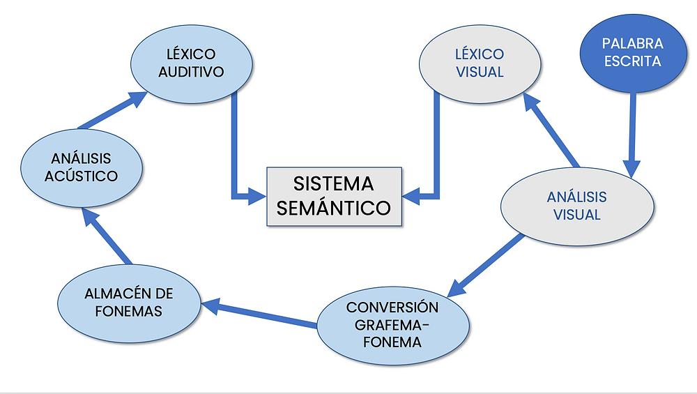 Figura 2. Lectura por ruta visual o superficial, basado en el modelo de Ellis y Young (1992).