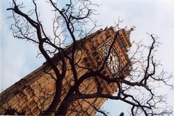 Big Ben and a tree 1