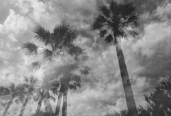 Palms and clouds