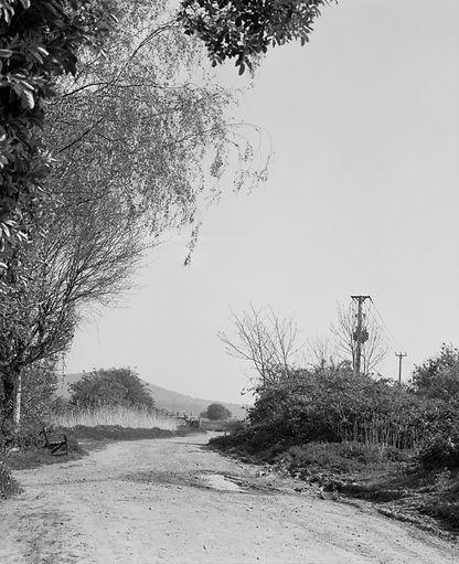 Virginia's path 6.jpg